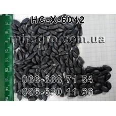 Семена подсолнечника НС Х 6042