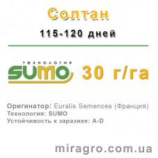 Солтан - под Гранстар (Express, Sumo)