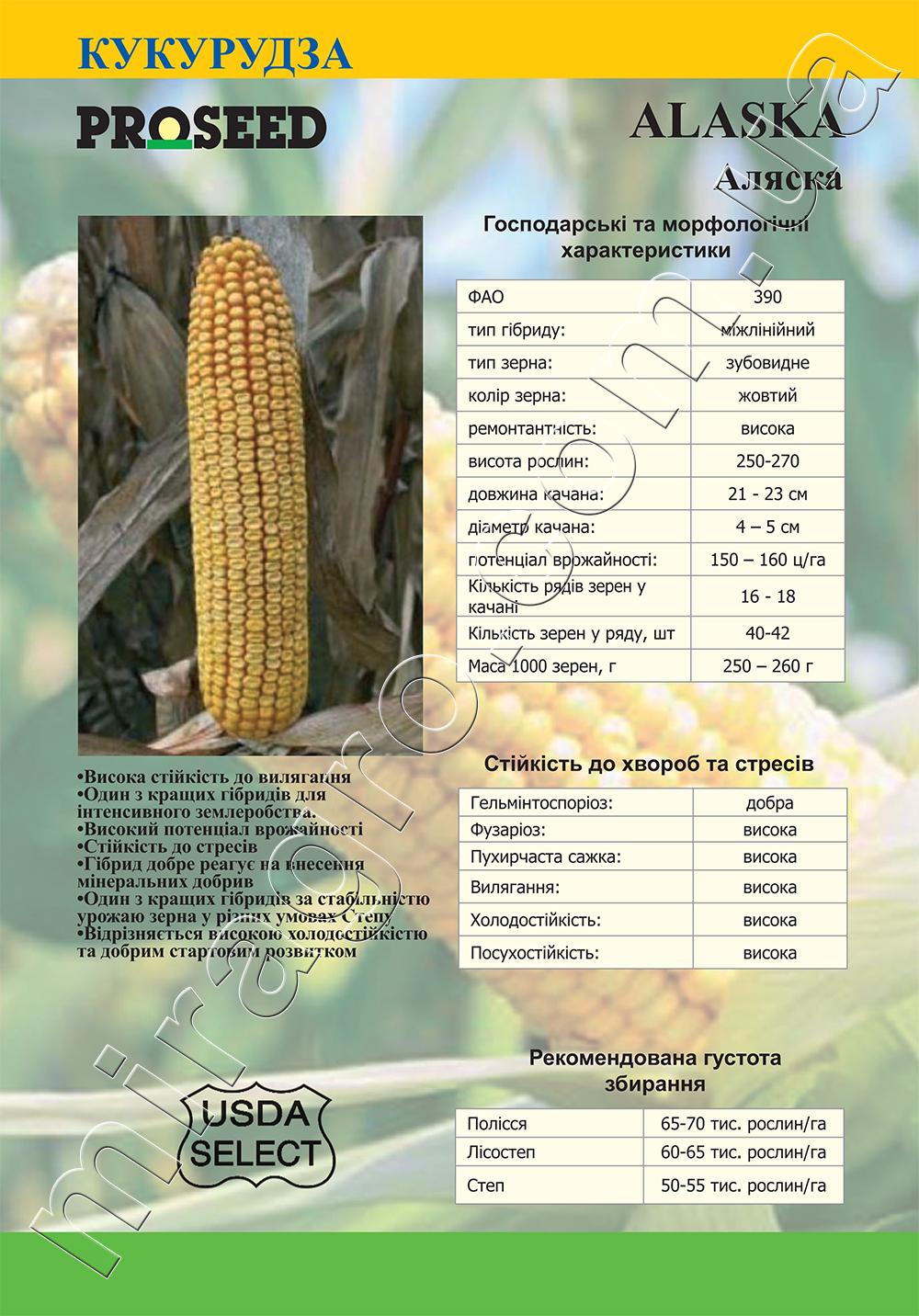 Гибрид кукурузы Аляска (Alaska) - описание каталог