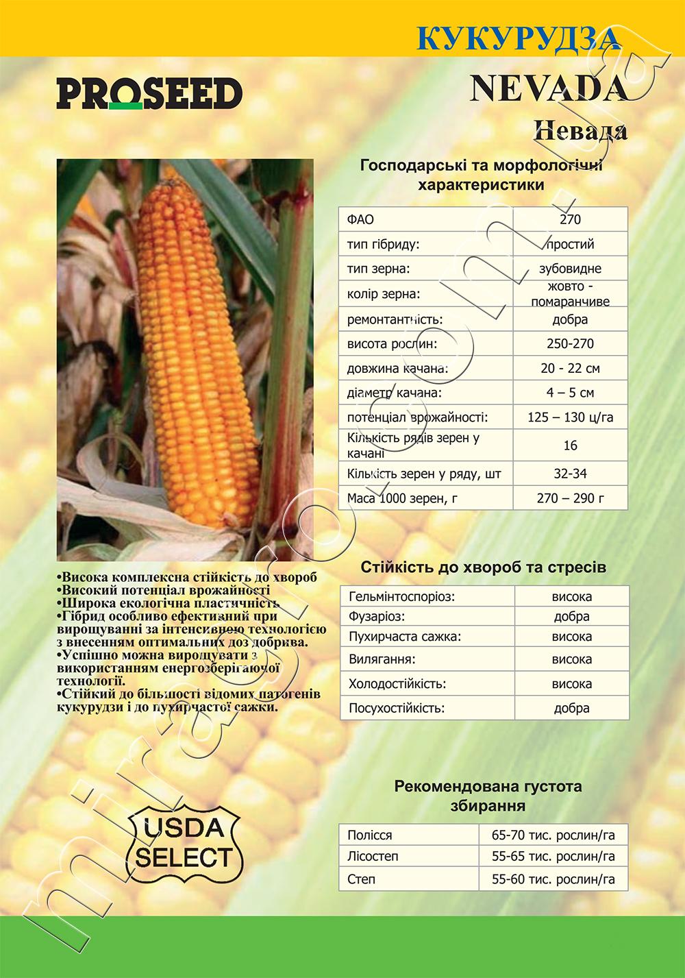 Гибрид кукурузы Невада (Nevada) - описание каталог
