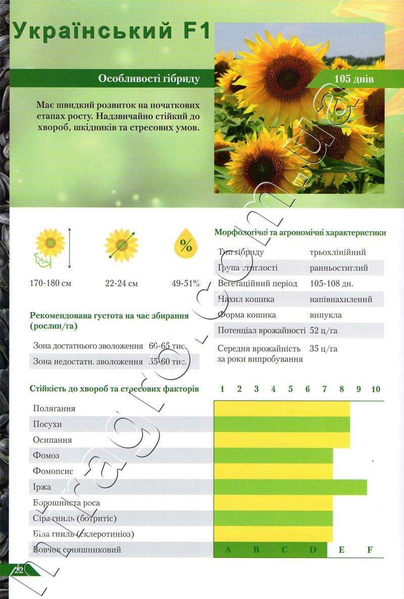 Описание подсолнечника Украинский F1