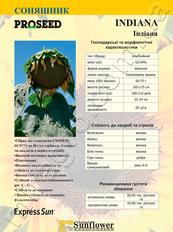 Подсолнечник Индиана - Indiana описание каталог