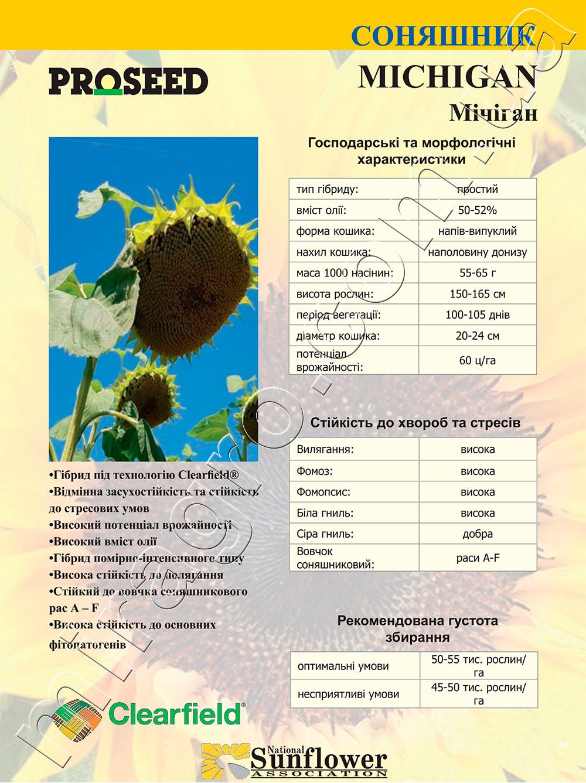 Подсолнечник Мичиган - Michigan описание каталог