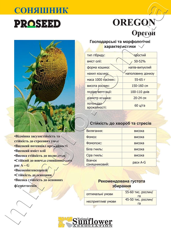 Подсолнечник Орегон - Oregon описание каталог