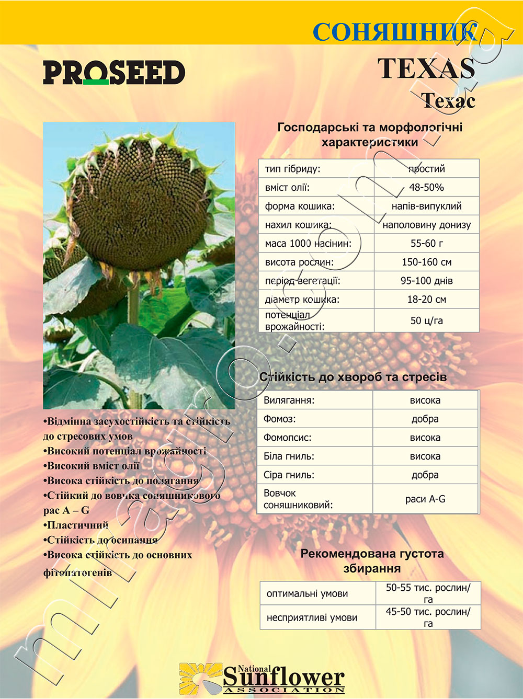 Подсолнечник Техас - Texas описание каталог