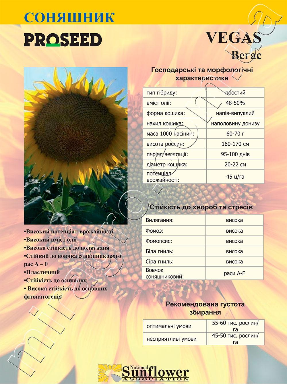 Подсолнечник Вегас - Vegas описание каталог